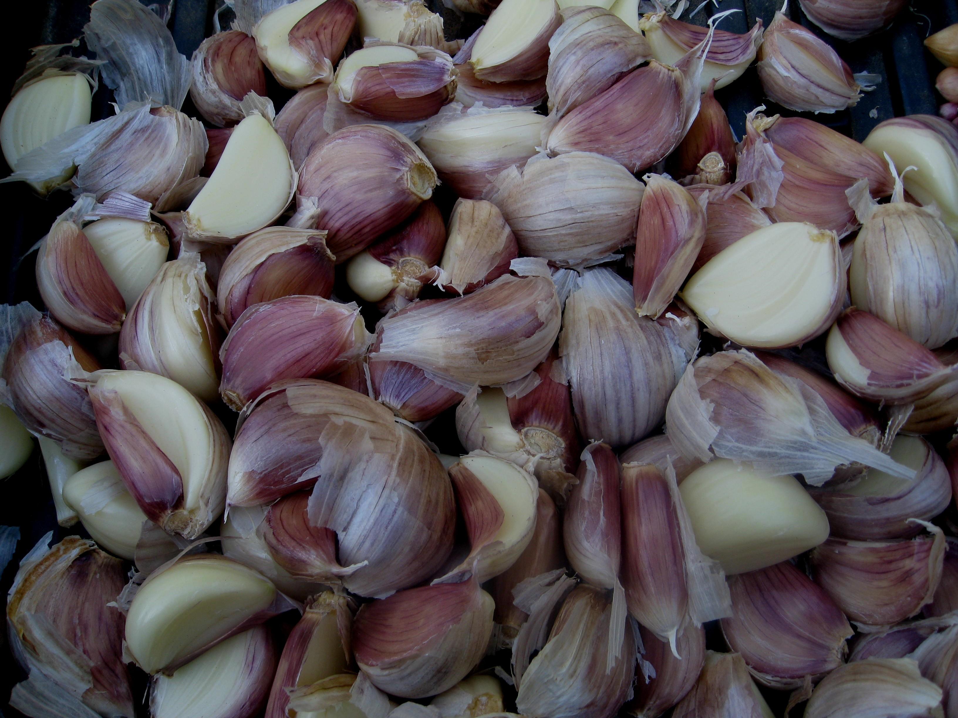 growing garlic in your garden the running garlic. Black Bedroom Furniture Sets. Home Design Ideas