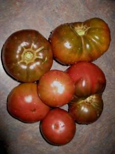dehydrating garlic tomatoes and apples the running garlic