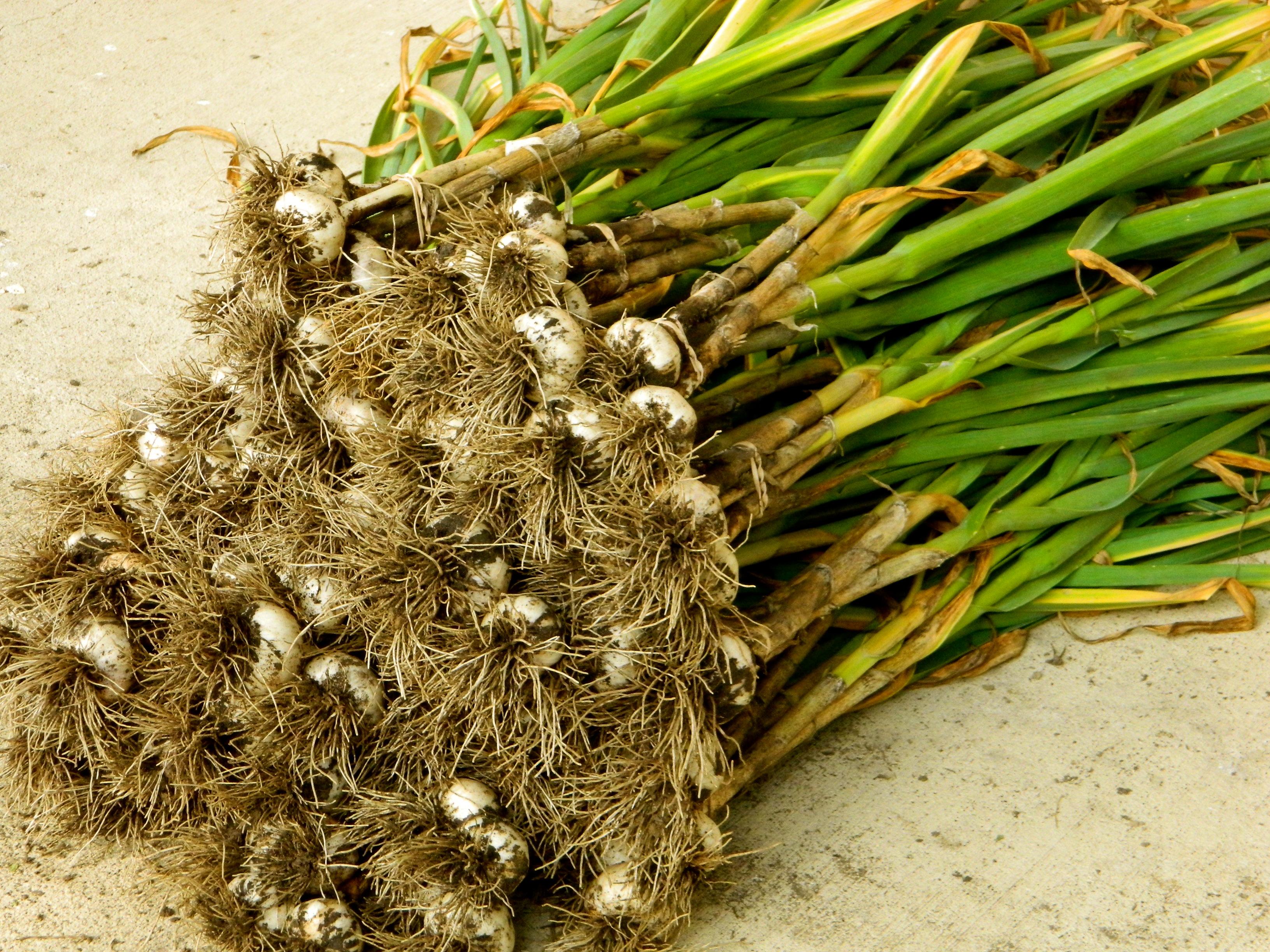 baby birds | The Running Garlic
